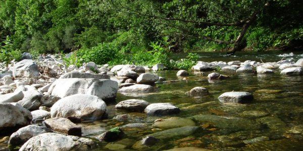 Milieu Zone humide - rivière (2)