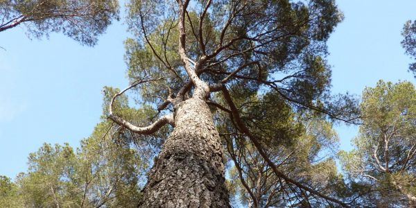 Milieux-Forêt (1)