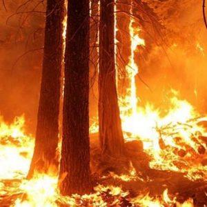 feu en forêt méditerranéenne (3)