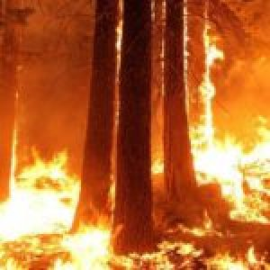 feu-en-forêt-méditerranéenne-3-150x150